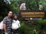 hamadryas baboons' entrance